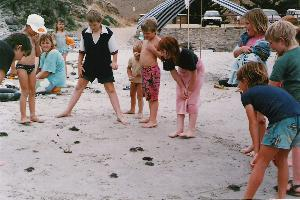 homeschooling children playing with crabs at the beach